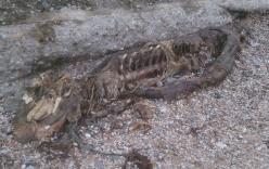 Xác sinh vật bí ẩn dạt vào bờ biển nước Anh gây hoang mang