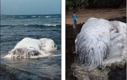 Xôn xao trước xác sinh vật lạ cuốn vào bãi biển Philippines