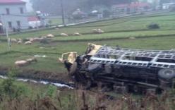 Hàng trăm con lợn chạy lông nhông sau tai nạn xe tải và xe giường nằm