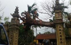 Chặt hạ cây sưa 50 tỷ trong vụ đánh nhau đổ máu tại cuộc họp ở Bắc Ninh