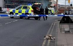 Cảnh sát Anh bắn chết đàn chó tấn công trẻ em giữa phố