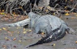 Cá sấu tấn công, xơi tái hươu trong công viên