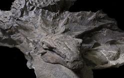 Phát hiện hóa thạch khủng long nguyên vẹn sau gần 110 triệu năm