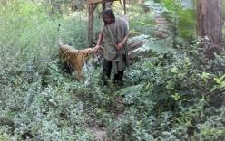 Hy hữu tình bạn giữa người và hổ kéo dài cả thập kỷ