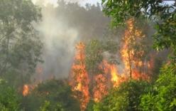 Vĩnh Phúc: Làm rõ vụ cháy rừng phòng hộ dự kiến làm siêu nghĩa trang