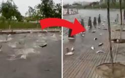 Sự thật đằng sau hiện tượng hàng trăm con cá nhảy lên bờ