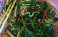 Hoảng hồn thấy rắn nổi lềnh phềnh trong bát mì đang ăn