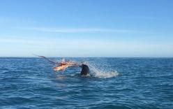 Đại chiến kinh hoàng giữa bạch tuộc khổng lồ và hải cẩu