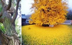 Loài cây bí ẩn thách thức cả bom nguyên tử nổ vẫn không thể chết