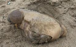 Phát hiện sinh vật lạ không mắt, miệng, chỉ có hai khối u ở bờ biển California