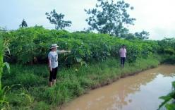 Hà Nội: Làm rõ nghi án bé 10 tuổi bị sát hại tử vong ở rãnh nước