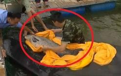 Cá trắm cỏ hơn 50kg sa lưới khiến nhiều người hoảng hốt