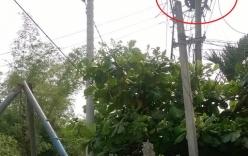 Phó giám đốc hợp tác xã bị điện giật tử vong