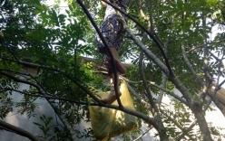 75 tuổi cụ bà vẫn trèo cây hái quả ngon lành