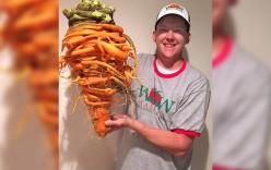 Chiêm ngưỡng củ cà rốt khổng lồ, hình thù kỳ dị nhất thế giới