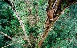 Lạ kỳ bộ lạc sống trên cây cao 50m, như thời nguyên thủy
