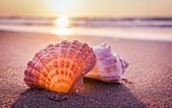 Nhặt được vỏ sò trên biển, cả gia đình bất ngờ khi lật mặt dưới lên