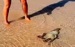 Cứu 1 con bạch tuộc, gia đình nhận được điều bấy ngờ khiến họ nhớ cả đời