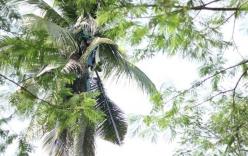 Lạ lùng người đàn ông sống suốt 3 năm trên cây dừa cao 18m
