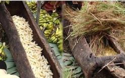 Bóc vỏ 500 quả chuối cho vào thân gỗ rỗng rồi đắp cỏ khô lên, cả thế giới bất ngờ đổ xô về thử