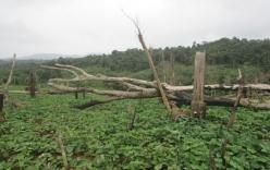 Đắk Nông: Hàng trăm cán bộ được cấp đất rừng trái quy định?