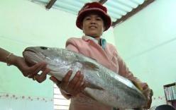 Xôn xao ngư dân Quảng Nam bắt được cá nghi sủ vàng quý hiếm