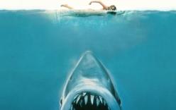 Tại sao cá mập luôn là nỗi khiếp sợ, dù chúng ta giết tới hàng triệu con mỗi năm?