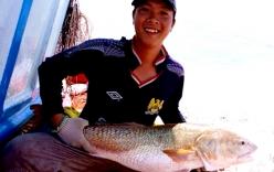 Bắt được cá 6 kg nghi cá sủ vàng quý hiếm ở miền Tây