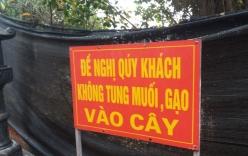 Hà Nội: Người dân vô tư rắc muối, gạo ngay trước biển cấm ở đền Và