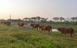 Vụ bé trai chăn bò bị sát hại: Thầy giáo cùng tham gia vụ ẩu đả