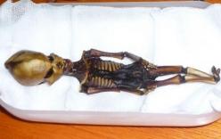 Phát hiện xác ướp chỉ dài 15 cm nghi của người ngoài hành tinh