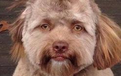 Lý giải khoa học đằng sau chú chó có khuôn mặt người đang gây bão mạng xã hội
