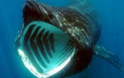 Hàng ngàn con cá mập đang có một hành vi rất lạ mà khoa học không thể lý giải