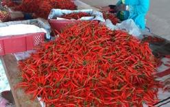 Bầu Đức thu được mỗi tháng hơn 30 tỷ đồng từ trồng ớt