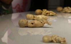 Tạm dừng triển lãm cơ thể người, thai nhi ở TP.HCM vì sai phạm, không trung thực