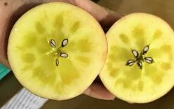 Tiết lộ về loại táo mật bạc triệu đang được \