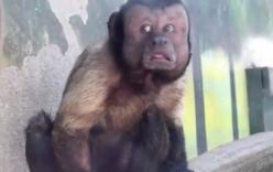 Trung Quốc: Chú khỉ nổi tiếng MXH vì có gương mặt thất thần giống hệt người vừa thua độ World Cup