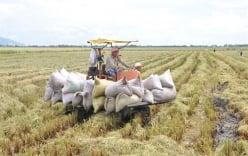7 người ở Nghệ An nhập viện cấp cứu vì bị ong đốt khi thu hoạch lúa