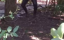 Tá hóa phát hiện thi thể người treo trên cây me cạnh căn nhà hoang