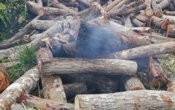 Côn đồ ngang nhiên tạt xăng đốt gỗ tang vật  khiến một cán bộ kiểm lâm bị bỏng nặng
