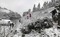 Miền Bắc năm nay lạnh sớm, có 2-4 đợt băng tuyết