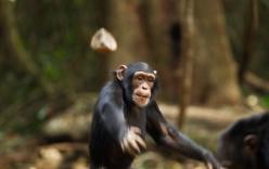 Bị đàn khỉ ném đá tử vong, gia đình nạn nhân đâm đơn kiện