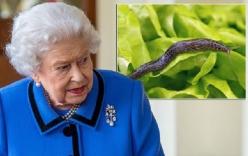 Đang ăn thì phát hiện ốc sên chết trong món salad, phản ứng của Nữ hoàng khiến đầu bếp hoàng gia \