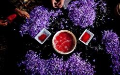 Bí mật thú vị của saffron - gia vị đắt nhất thế giới gần 1 tỷ/kg từng được Nữ hoàng Ai Cập dùng dưỡng nhan