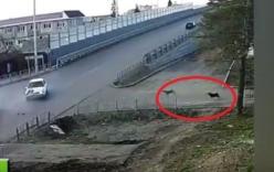 Cảnh tượng kỳ lạ ở ngã ba tử thần: Hai chú chó cứ tai nạn là chạy ra xem