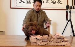 Đại gia Biên Hòa chia sẻ lý do mua chú chó cơ bắp 2,6 tỷ của Trung Quốc