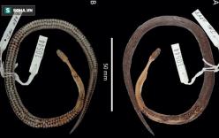 Phát hiện loài rắn mới khi mổ bụng rắn cực độc vùng Trung Mỹ