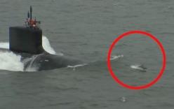 Cảnh tượng hiếm gặp: Cá heo đua tốc độ với tàu ngầm Mỹ