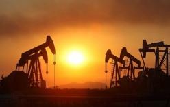 Tin tức giá xăng dầu mới nhất ngày 16/1/2019: Đứng yên chờ thời