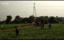Video: Bị dồn vào đường cùng, báo hoang vồ 3 người liên tiếp